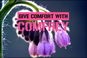 comfrey plant #heatherearles #herbnwisdom #naturalliving #comfrey #woundhealing #sprains