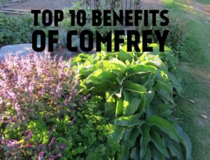 top 10 benefits of comfrey