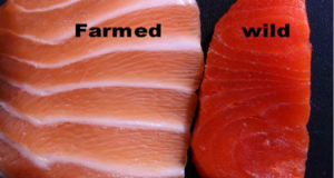 wild caught fish and farmed