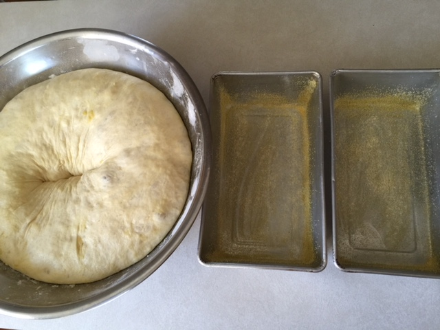 dough ready to put in loaf pans