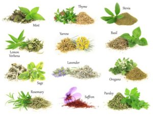 Using Fresh and Dried Herbs | Heather Earles