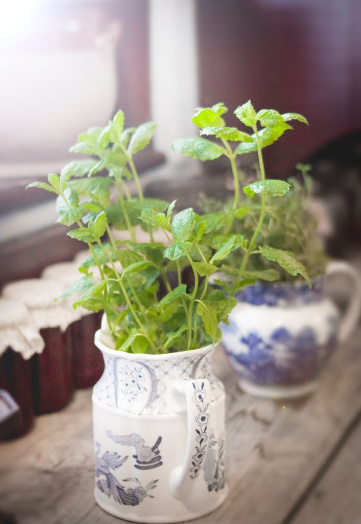 The Many Uses of Oregano #heatherearles #herbnwisdom #naturalliving #healthblogger #podcaster #oregano #italiandishes #herbels