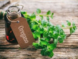 Oregano Oil Uses #heatherearles #herbnwisdom #naturalliving #healthblogger #podcaster #oregano #italiandishes #herbels #spiderbites