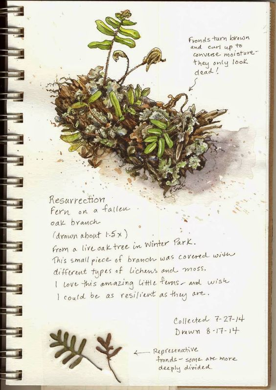 How to create a nature journal #heatherearles #herbnwisdom #naturalliving #author #naturejournal #science