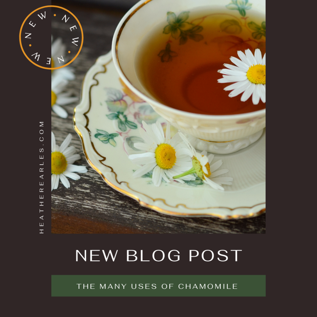 The Many Uses of Chamomile #heatherearles #herbnwisdom #naturalliving #northerngirl #herbalteas #chamomile #farmsteading #foodie